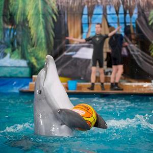 Дельфинарии, океанариумы Шилово